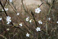 hvide-blomster-2